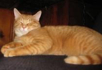 cat lost in Varennes