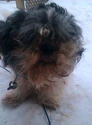 dog found in Ville Emard