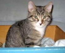 kitten found in Pointe St Chalres