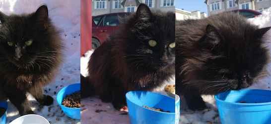 cat found in La Plaine