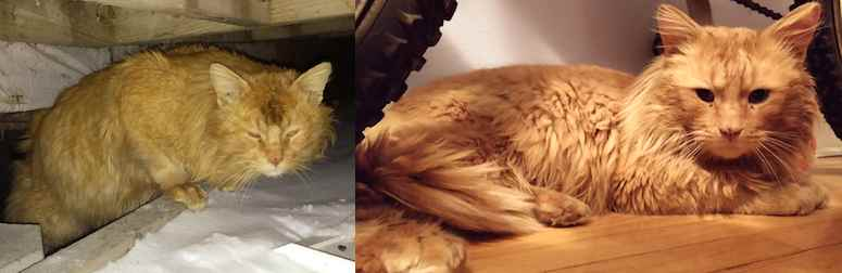 cat found in Kahnawake