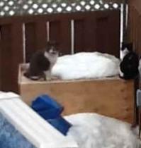 cat found in Ste Dorothée