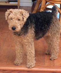 dog found in R.D.P.