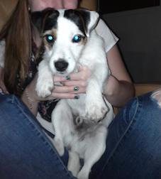 dog lost in Lachenaie