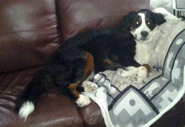 dog lost in Ste-Julienne