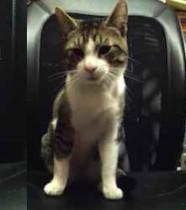 cat found in Griffintown