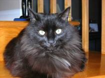cat found in Iberville