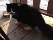 cat found in Lévis
