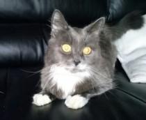 cat found in St Jean-sur-Richelieu