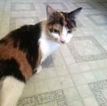cat foundi n St-Michel
