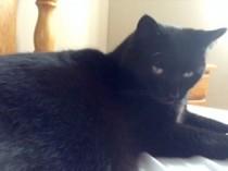 cat lost in Beloeil