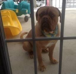 dog found in Assomption