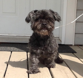 dog found in Chambly