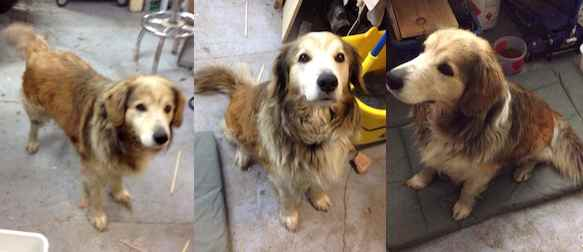 dog found in Prévost