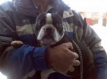 dog found in Repentigny