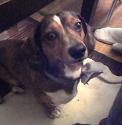 dog lost in St Gabriel