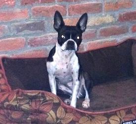 dog lost at Tremblant
