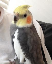 bird lost in Ahuntsic