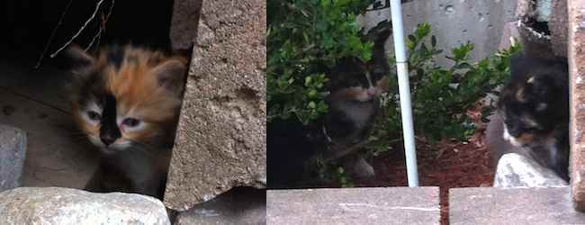 cat foundi n Laval