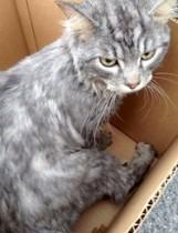 cat found in Richelieu