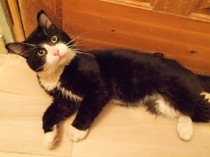 cat found ind in St Alphonse Rodriguez