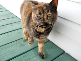 cat found in St Francois du Lac