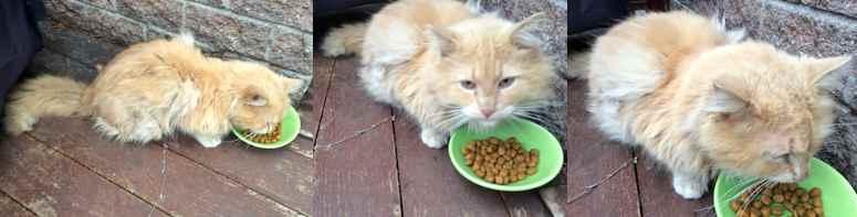 cat found in St Hubert