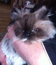 cat found in St-Timothée