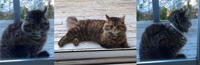 cat found in Val Morin
