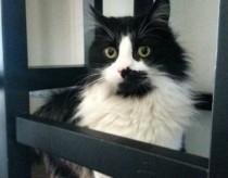 cat lost in Ville St-Laurent