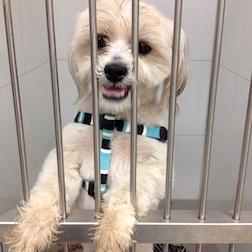 dog found in Beloeil