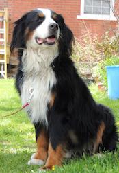 dog found in Ormstown