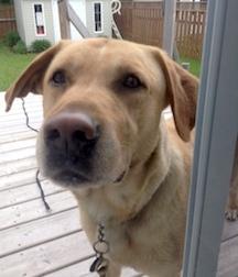 dog found in St Hubert