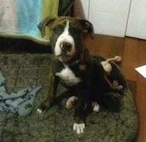 dog lost in Laplaine