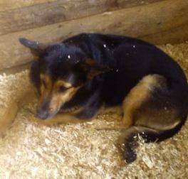 dog lost in Ste Sophie