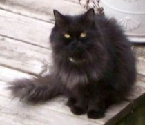 kitten found in LaSalle