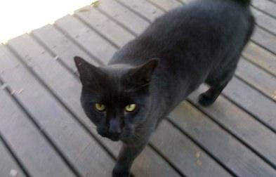 cat found in Beaurepaire