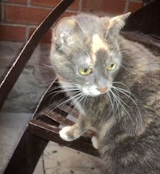 cat found in Centreville