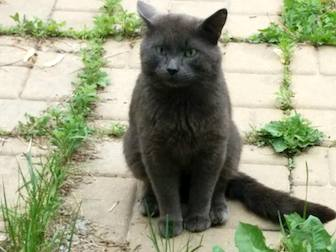 cat found in Charlemagne
