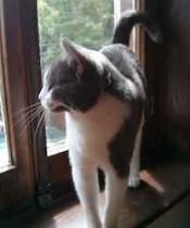 cat found in Montcalm