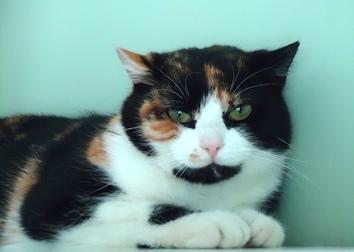 cat found in Point-aux-Trembles