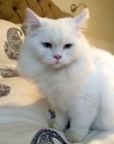 cat found in Pointe St-Charles