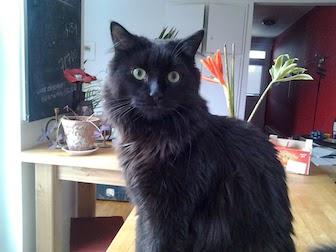cat lost in Villeray