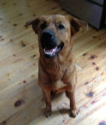 dog found in Dunvegan