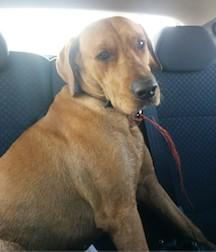 dog found in La Prairie