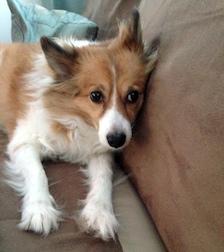 dog lost in Farnham