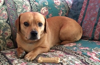 dog lost in Greenfield Park