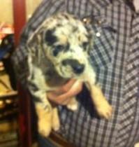 dog lost in Ste-Sophie