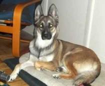 dog stolen in Verdun