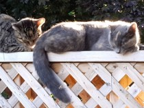 2 cats found in South West Montreal
